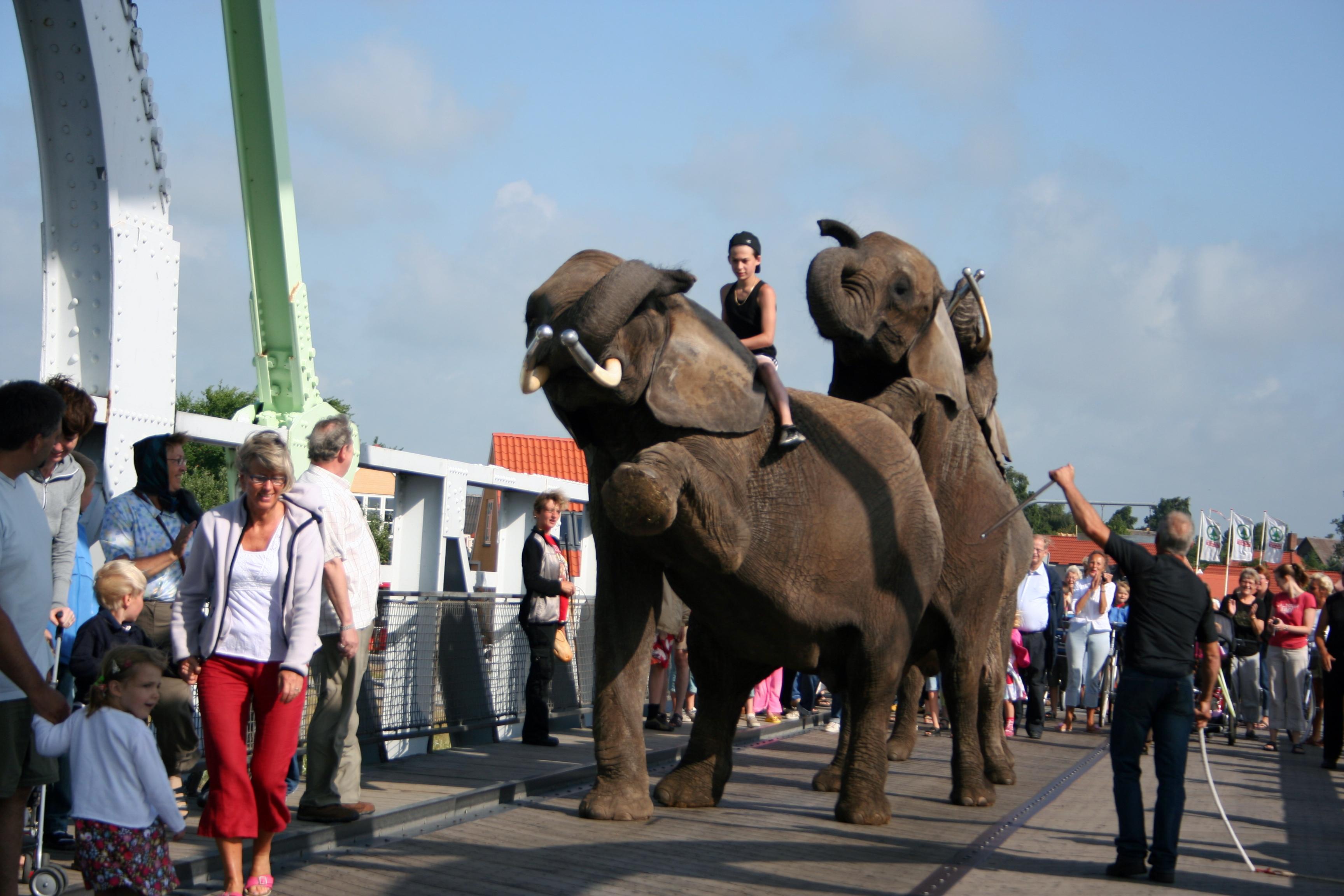11NAS-mobe-elefant1